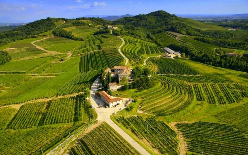 cantine e vini dei vip in Italia